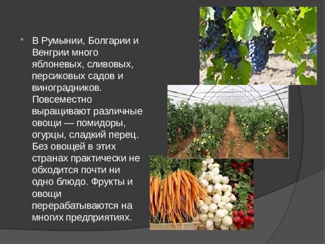 В Румынии, Болгарии и Венгрии много яблоневых, сливовых, персиковых садов и виноградников. Повсеместно выращивают различные овощи — помидоры, огурцы, сладкий перец. Без овощей в этих странах практически не обходится почти ни одно блюдо. Фрукты и овощи перерабатываются на многих предприятиях.