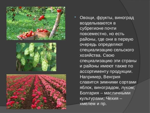 Овощи, фрукты, виноград возделываются в субрегионе почти повсеместно, но есть районы, где они в первую очередь определяют специализацию сельского хозяйства. Свою специализацию эти страны и районы имеют также по ассортименту продукции. Например, Венгрия славится зимними сортами яблок, виноградом, луком; Болгария – масличными культурами; Чехия – хмелем и пр.