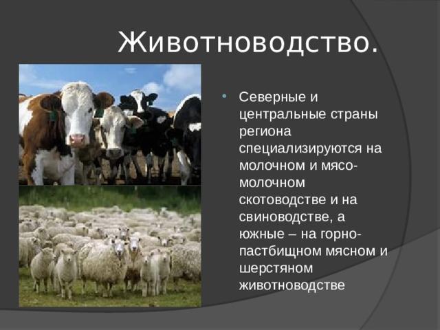 Животноводство.