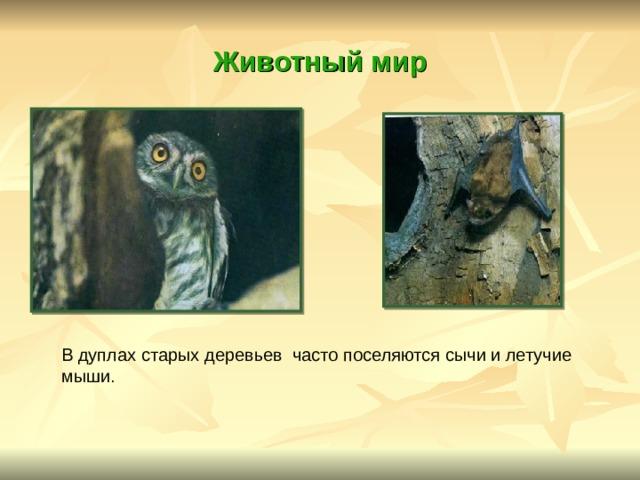 Животный мир В дуплах старых деревьев часто поселяются сычи и летучие мыши .
