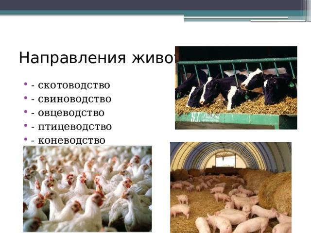 Направления животноводства: