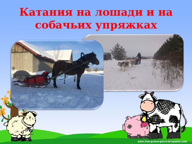 Катания на лошади и на собачьих упряжках