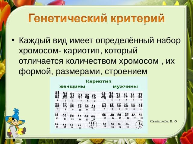 Каждый вид имеет определённый набор хромосом- кариотип, который отличается количеством хромосом , их формой, размерами, строением     Колпащиков. В. Ю