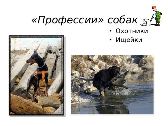«Профессии» собак