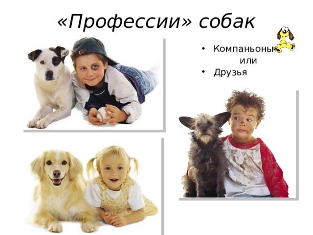 «Профессии» собак Компаньоны  или