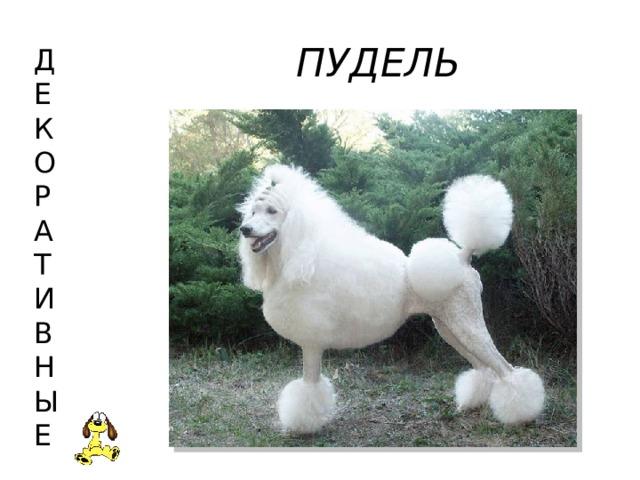 ПУДЕЛЬ Д  Е  К  О  Р  А  Т  И  В  Н  Ы  Е