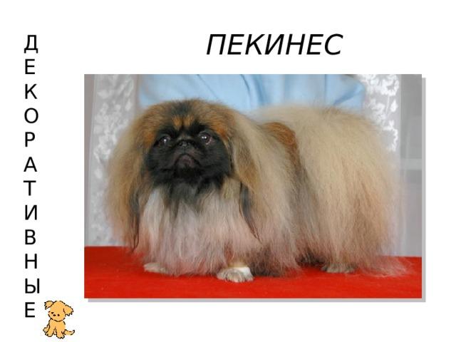 ПЕКИНЕС Д  Е  К  О  Р  А  Т  И  В  Н  Ы  Е