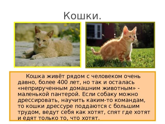 Кошки.   Кошка живёт рядом с человеком очень давно, более 400 лет, но так и осталась «неприрученным домашним животным» - маленькой пантерой. Если собаку можно дрессировать, научить каким-то командам, то кошки дрессуре поддаются с большим трудом, ведут себя как хотят, спят где хотят и едят только то, что хотят.