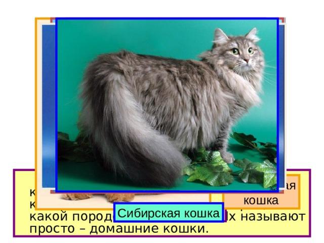 На свете около 60 разных пород кошек. Но большинство тех кошек, которые живут в наших квартирах, ни к какой породе не относятся. Их называют просто – домашние кошки. Персидская кошка Обычная домашняя кошка Сиамская кошка Русская голубая Сибирская кошка