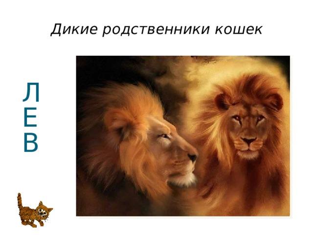 Дикие родственники кошек Л  Е  В