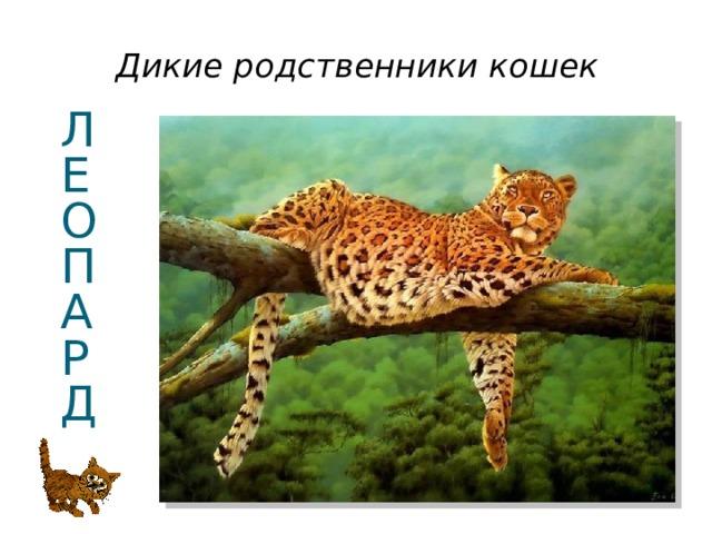Дикие родственники кошек Л  Е  О  П  А  Р  Д