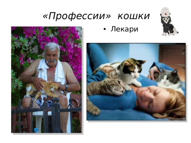«Профессии» кошки