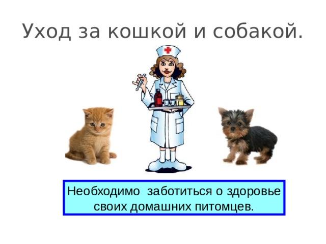 Уход за кошкой и собакой. Необходимо заботиться о здоровье своих домашних питомцев.
