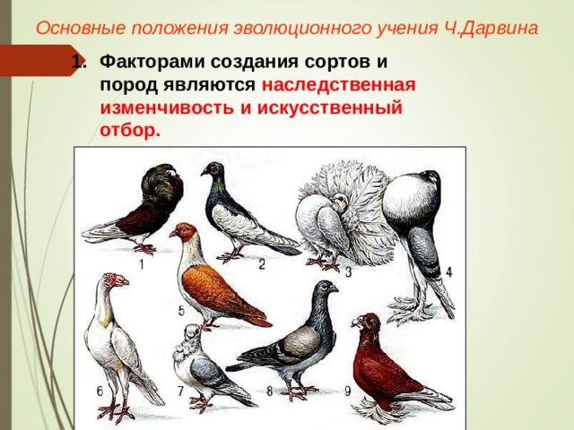Основные положения эволюционного учения Ч.Дарвина Факторами создания сортов и пород являются наследственная изменчивость и искусственный отбор.