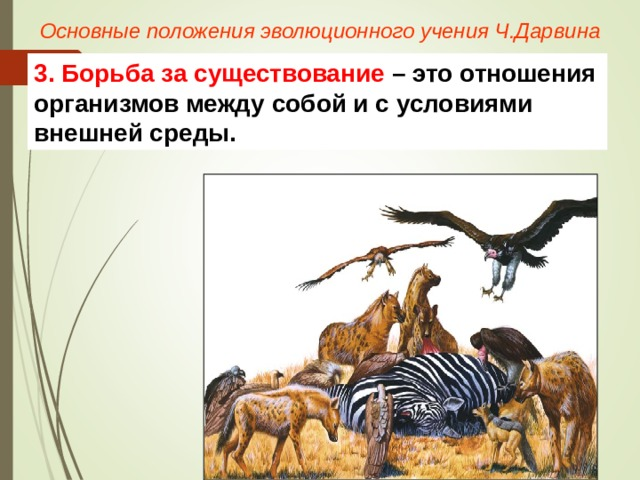 Основные положения эволюционного учения Ч.Дарвина 3. Борьба за существование – это отношения организмов между собой и с условиями внешней среды.