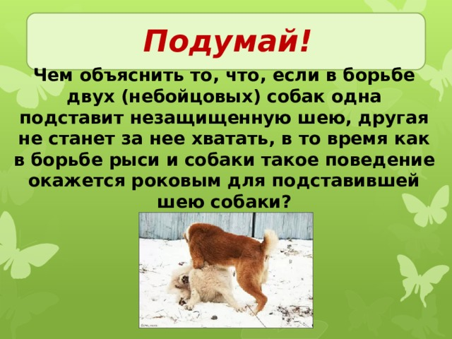 Подумай! Чем объяснить то, что, если в борьбе двух (небойцовых) собак одна подставит незащищенную шею, другая не станет за нее хватать, в то время как в борьбе рыси и собаки такое поведение окажется роковым для подставившей шею собаки?