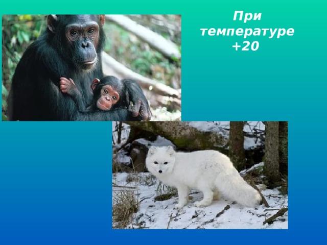 При температуре +20