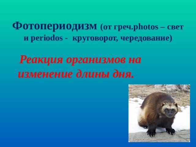 Фотопериодизм (от греч. photos – свет и periodos - круговорот, чередование)  Реакция организмов на изменение длины дня.