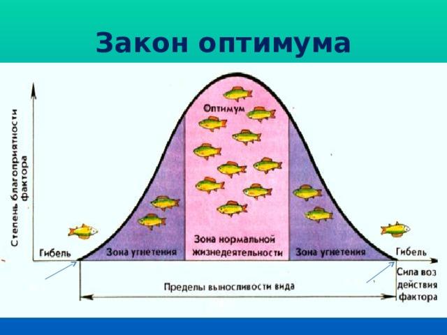 Закон оптимума К.т. К.т.
