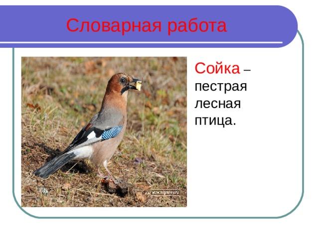 Словарная работа        Сойка –        пестрая        лесная        птица.