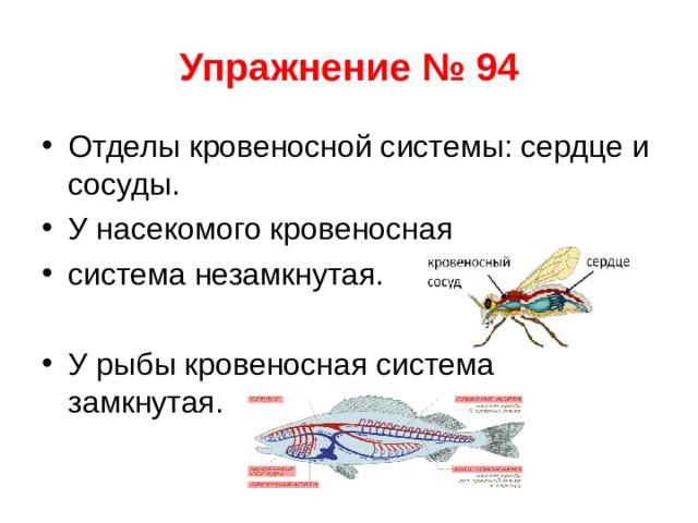 Упражнение № 94