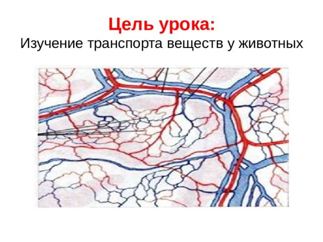 Цель урока:  Изучение транспорта веществ у животных