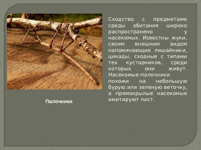 Сходство с предметами среды обитания широко распространено у насекомых. Известны жуки, своим внешним видом напоминающие лишайники, цикады, сходные с типами тех кустарников, среди которых они живут. Насекомые-палочники похожи на небольшую бурую или зеленую веточку, а прямокрылые насекомые имитируют лист. Палочники