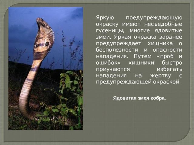 Яркую предупреждающую окраску имеют несъедобные гусеницы, многие ядовитые змеи. Яркая окраска заранее предупреждает хищника о бесполезности и опасности нападения. Путем «проб и ошибок» хищники быстро приучаются избегать нападения на жертву с предупреждающей окраской. Ядовитая змея кобра.