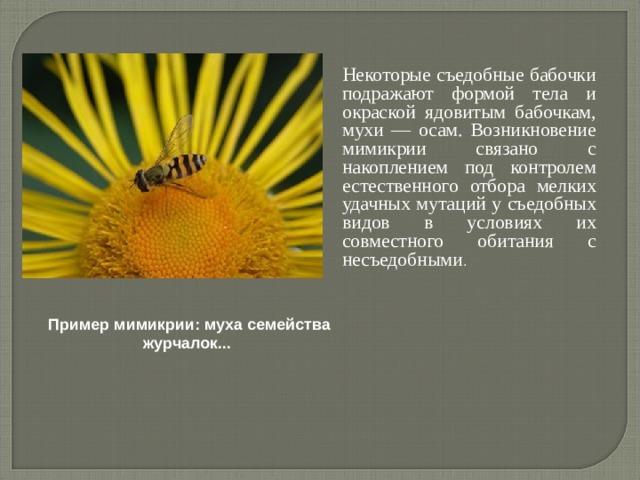 Некоторые съедобные бабочки подражают формой тела и окраской ядовитым бабочкам, мухи — осам. Возникновение мимикрии связано с накоплением под контролем естественного отбора мелких удачных мутаций у съедобных видов в условиях их совместного обитания с несъедобными . Пример мимикрии: муха семейства журчалок...