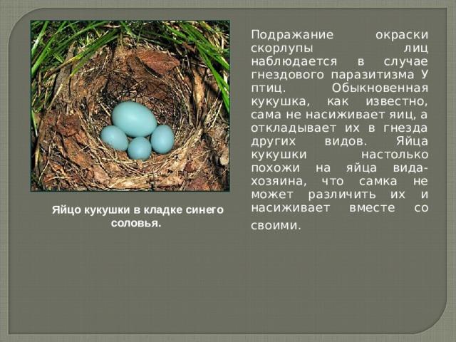 Подражание окраски скорлупы лиц наблюдается в случае гнездового паразитизма У птиц. Обыкновенная кукушка, как известно, сама не насиживает яиц, а откладывает их в гнезда других видов. Яйца кукушки настолько похожи на яйца вида-хозяина, что самка не может различить их и насиживает вместе со своими.  Яйцо кукушки в кладке синего соловья.