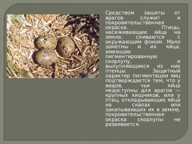 Средством защиты от врагов служит и покровительственная окраска. Птицы, насиживающие яйца на земле, сливаются с окружающим фоном. Мало заметны и их яйца, имеющие пигментированную скорлупу, и вылупляющиеся из них птенцы. Защитный характер пигментации яиц подтверждается тем, что у видов, чьи яйца недоступны для врагов — крупных хищников, или у птиц, откладывающих яйца на скалах или закапывающих их в землю, покровительственная окраска скорлупы не развивается.
