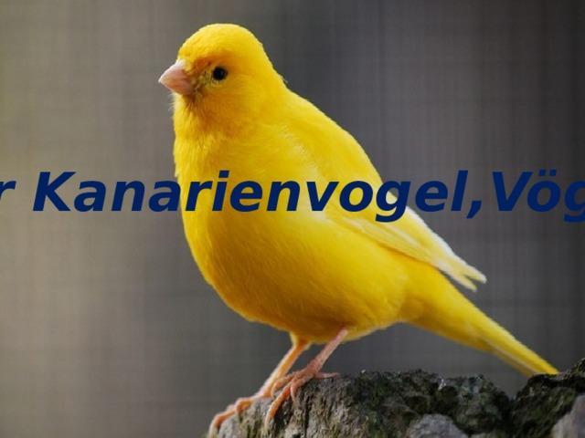 der Kanarienvogel,Vögel der Kanarienvogel,Vögel