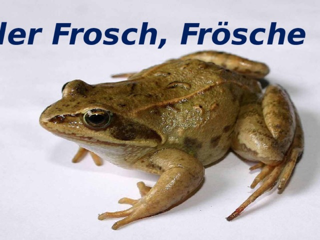 der Frosch, Frösche der Frosch, Frösche