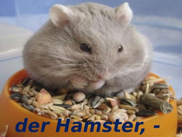 der Hamster, - der Hamster, -