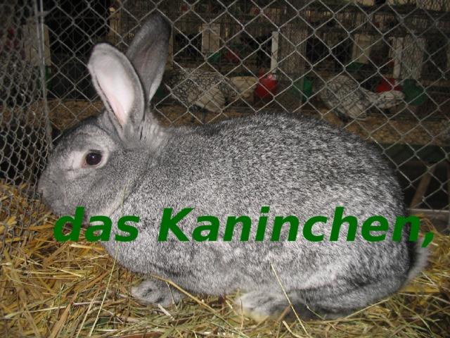 das Kaninchen, -  das Kaninchen, -