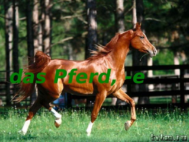 das Pferd, -e das Pferd, -e