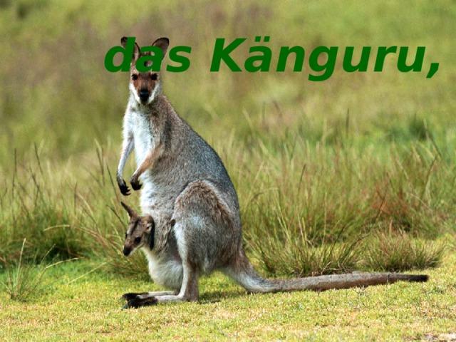 das Känguru, -s das Känguru, -s