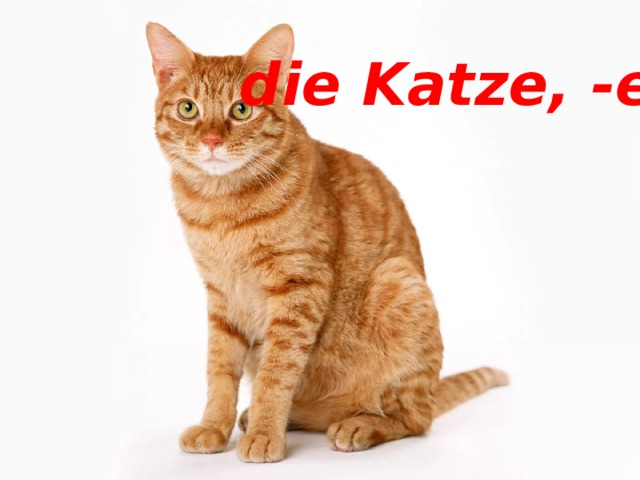 die Katze, -en die Katze, -en