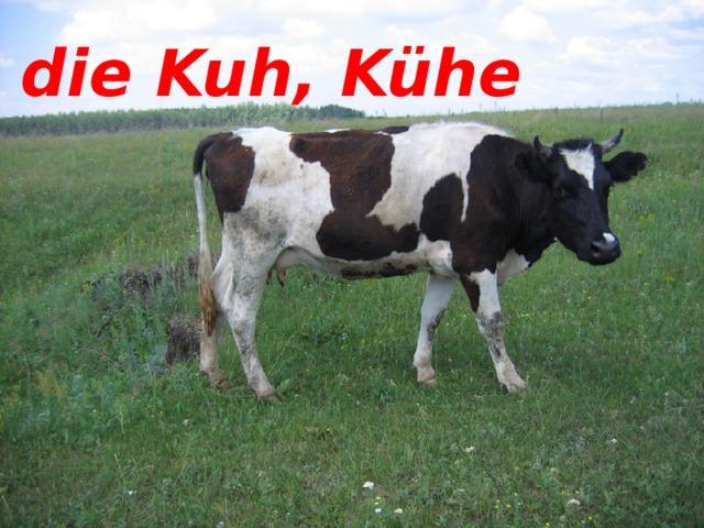 die Kuh, Kühe die Kuh, Kühe