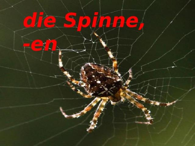 die Spinne, -en die Spinne, -en