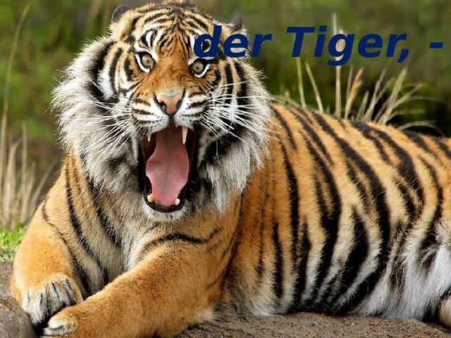 der Tiger, - der Tiger, -