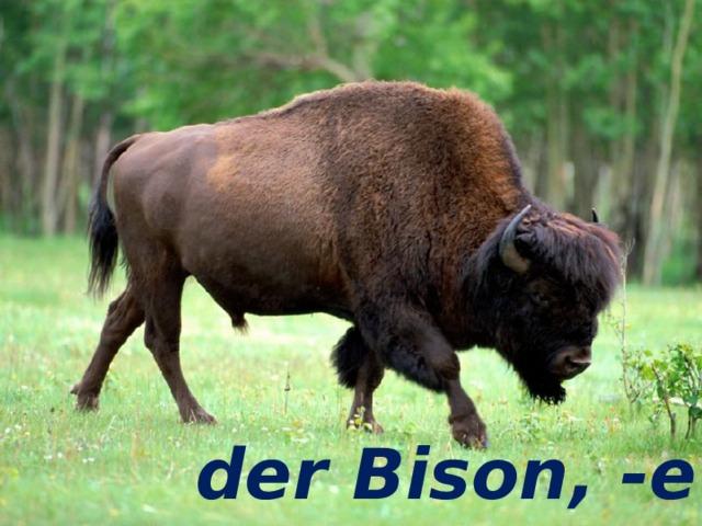 der Bison, -e der Bison, -e