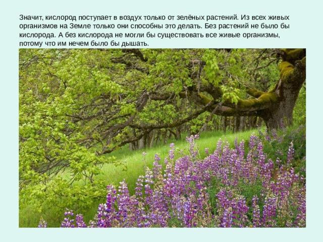 Значит, кислород поступает в воздух только от зелёных растений. Из всех живых организмов на Земле только они способны это делать. Без растений не было бы кислорода. А без кислорода не могли бы существовать все живые организмы, потому что им нечем было бы дышать.