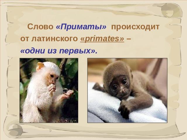 Слово «Приматы» происходит от латинского « primates »  – «одни из первых». Приматы были в числе первых появившихся на земле из отряда млекопитающих, сейчас их свыше 200 видов — от лемуров до человека.