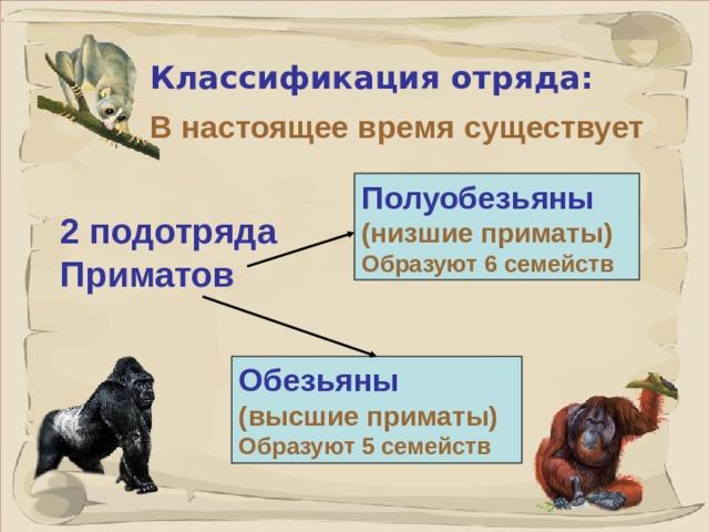 Классификация отряда: В настоящее время существует  Полуобезьяны  (низшие приматы) Образуют 6 семейств  2 подотряда Приматов Обезьяны  (высшие приматы) Образуют 5 семейств