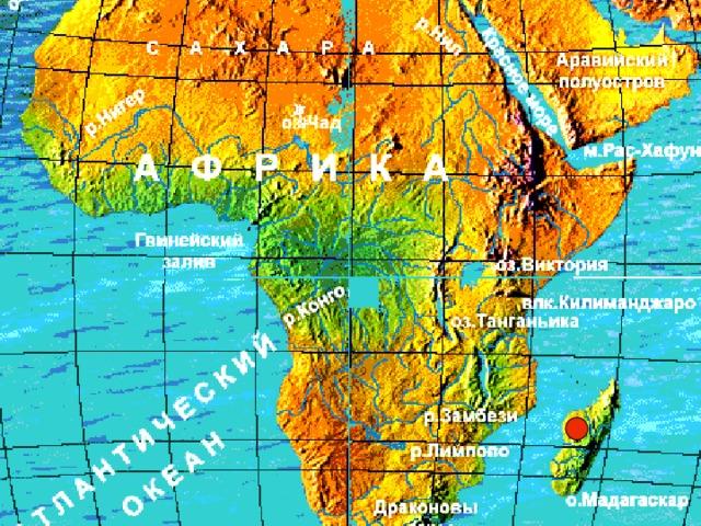 Лемуры  -  семейство полуобезьян, насчитывающее 6 родов с 14 видами. Обитают в тропических лесах острова  Мадагаскар. Венценосные лемуры