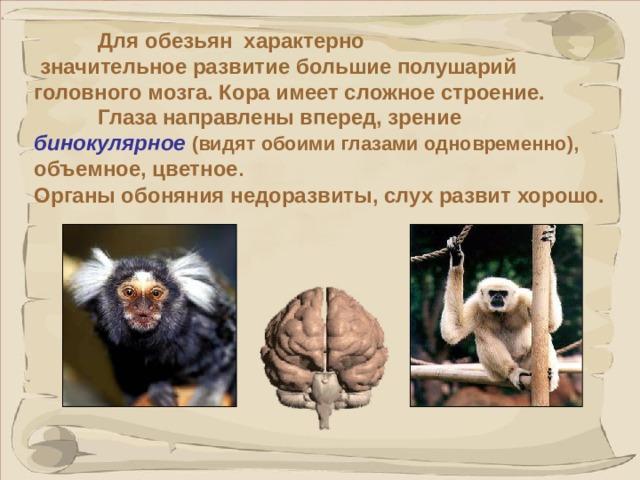 Для обезьян характерно  значительное развитие большие полушарий головного мозга. Кора имеет сложное строение.  Глаза направлены вперед, зрение бинокулярное  (видят обоими глазами одновременно), объемное, цветное .  Органы обоняния недоразвиты, слух развит хорошо.  Эти морфологические особенности указывают на эволюционное превосходство приматов над другими млекопитающими.