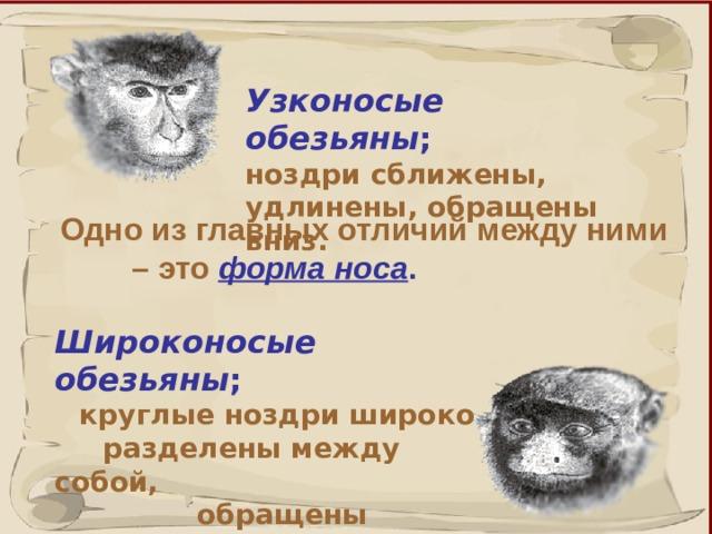 Узконосые обезьяны ;  ноздри сближены, удлинены, обращены вниз. Одно из главных отличий между ними  – это форма носа . Широконосые обезьяны ;   круглые ноздри широко  разделены между собой,   обращены наружу. 41 41