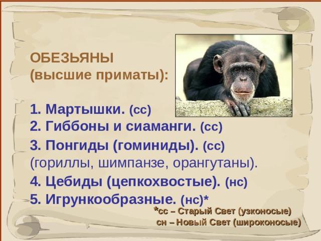 ОБЕЗЬЯНЫ (высшие приматы):  1. Мартышки.  (сс)  2.  Гиббоны и сиаманги. (сс)  3.  Понгиды (гоминиды). (сс)  (гориллы, шимпанзе, орангутаны). 4.  Цебиды (цепкохвостые). (нс)  5.  Игрункообразные. (нс) *  * сс – Старый Свет (узконосые)  сн – Новый Свет (широконосые) 41 41