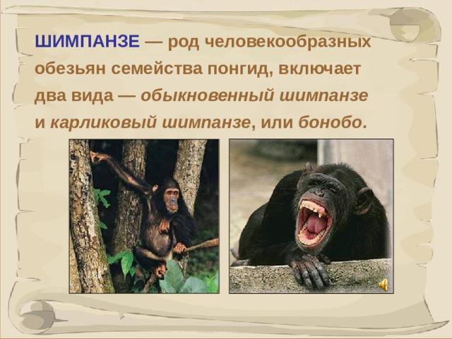 ШИМПАНЗЕ  — род человекообразных обезьян семейства понгид, включает два вида — обыкновенный шимпанзе и карликовый шимпанзе , или бонобо. Бонобо некоторые исследователи предлагают выделить в отдельный род. Шимпанзе — крупные обезьяны с длиной тела до 150 см, масса от 45-50 кг до 80 кг. Шимпанзе способны к бескорыстной взаимопомощи. Эксперименты с полуторагодовалыми детьми и молодыми шимпанзе показали, что и те и другие готовы бескорыстно помочь человеку, попавшему в затруднительную ситуацию, если только могут понять, в чем состоит трудность и как ее преодолеть.  41 41